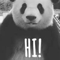夜来香 - 不咬人熊猫