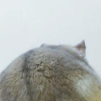 黑暗之光 - 龙猫小白
